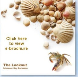 The Lookout ebrochure