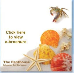 The Penthouse ebrochure